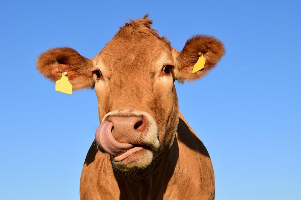 Carne: cosa si intende per benessere dell'animale?
